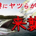 鳥取サゴシング