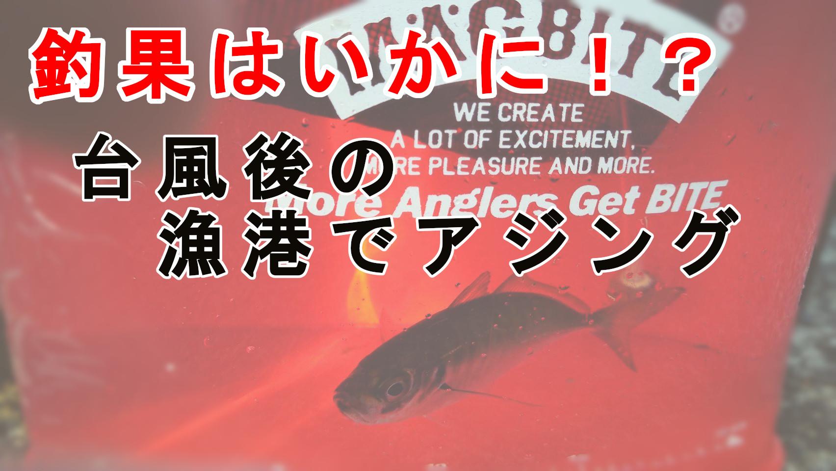 鳥取県東部漁港釣果