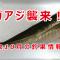 鳥取県10月の釣果情報