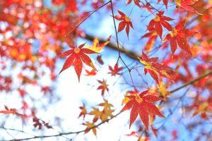 鳥取秋の釣果情報